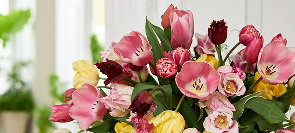 Pour bien choisir vos fleurs, consultez notre guide